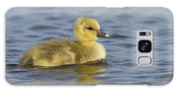 Gosling Galaxy Case - Greylag Goose Gosling Zeeland by Sytze Jongma
