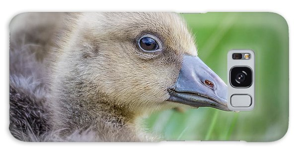 Gosling Galaxy Case - Greylag Goslings, Iceland by Panoramic Images