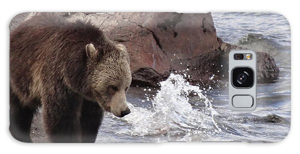 Grizzly Bears Galaxy Case - Grizzly Bear At Yellowstone Lake by Dan Sproul