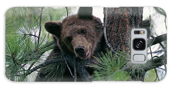 Grizzly Bears Galaxy Case - Grizzly Bear by Philippe Psaila/science Photo Library