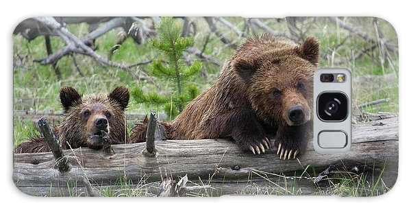 Grizzly Bears Galaxy Case - Grizzly Bear Sow And Cub by Ken Archer