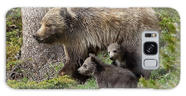 Grizzly Bear With Cubs Galaxy Case