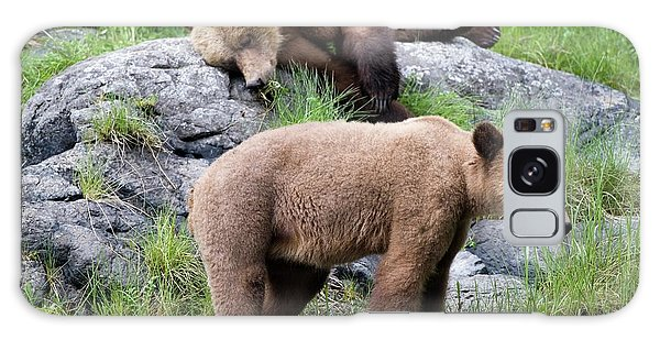 Grizzly Bears Galaxy Case - Grizzly Bears by Dr P. Marazzi/science Photo Library