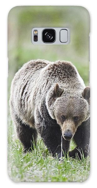 Grizzly Looking For Flowers To Eat Galaxy Case