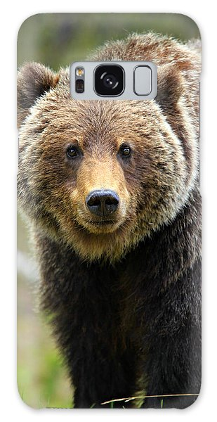 Grizzly Bears Galaxy Case - Grizzly by Stephen Stookey