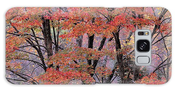 Groton Forest Maples Galaxy Case by Alan L Graham