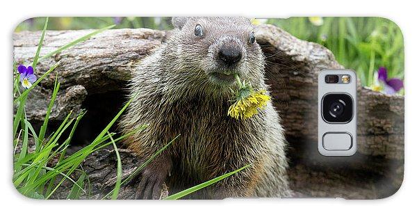 Groundhog Galaxy Case - Groundhog  Kit Marmota Monax by Debbie Dicarlo