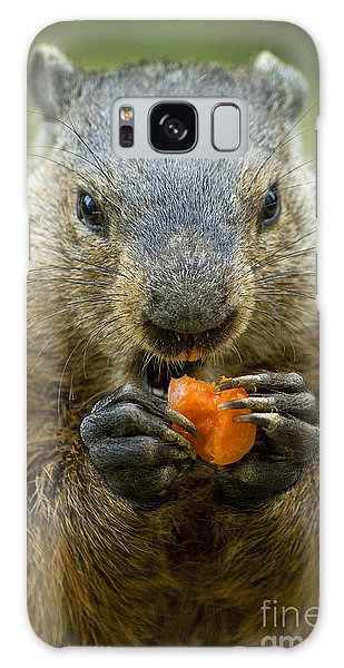 Groundhogs Favorite Snack Galaxy Case