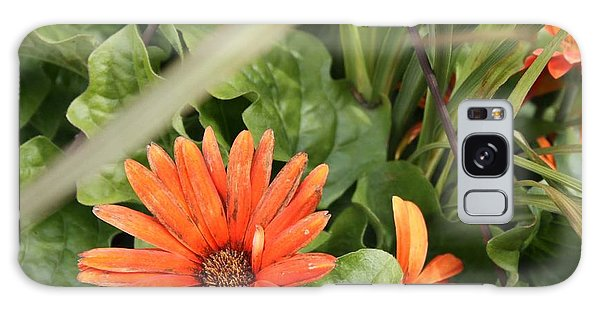 Group Of Orange Daisys Galaxy Case
