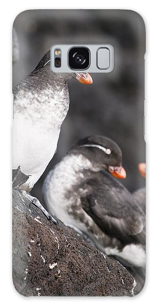 Group Of Parakeet Auklets, St. Paul Galaxy Case