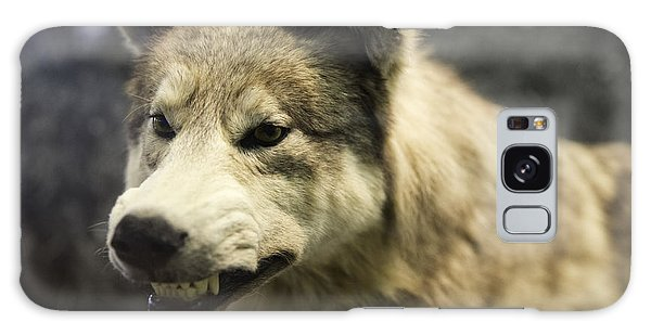 Growling Wolf Galaxy Case