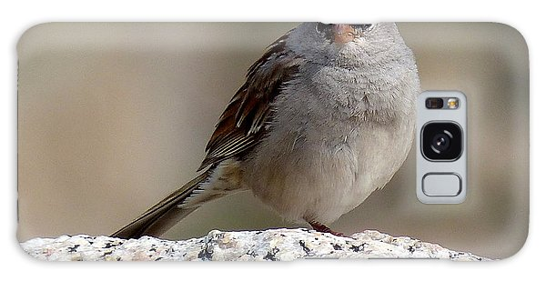 Grumpy White Crowned Sparrow Galaxy Case