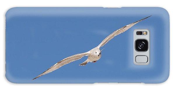 Gull In Flight - 2 Galaxy Case