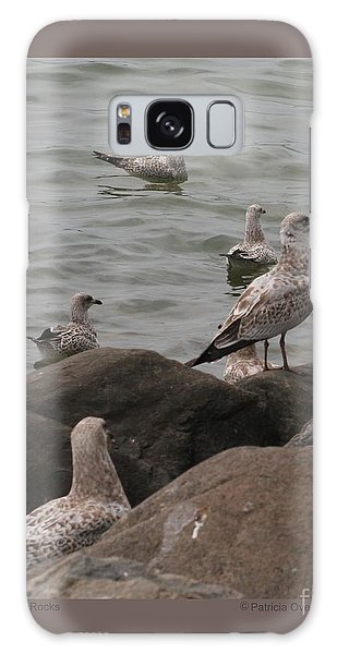 Gulls On The Rocks Galaxy Case by Patricia Overmoyer