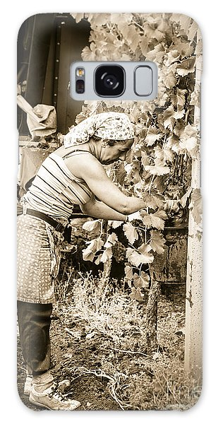 Hand Pickers Following The Mechanical Harvester Harvesting Wine  Galaxy Case