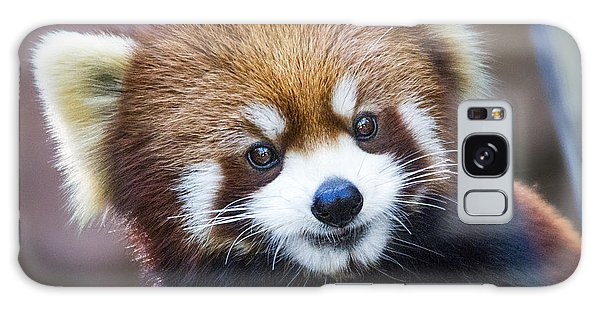 Happy Red Panda Galaxy Case