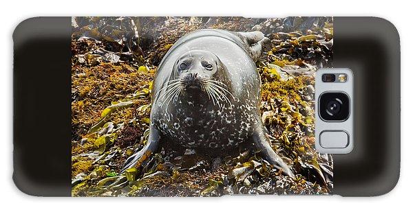 Harbor Seal Galaxy Case by Alice Cahill