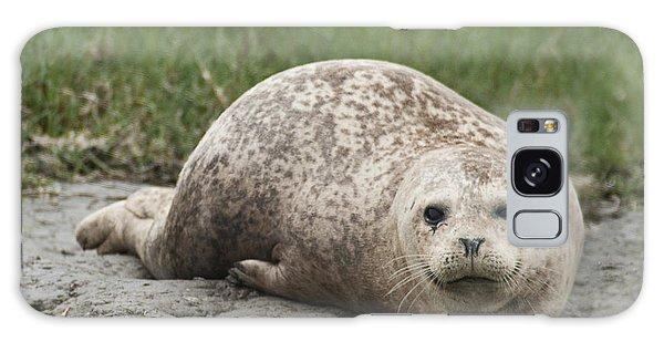 Harbor Seal Galaxy Case