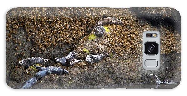 Harbor Seals Galaxy Case