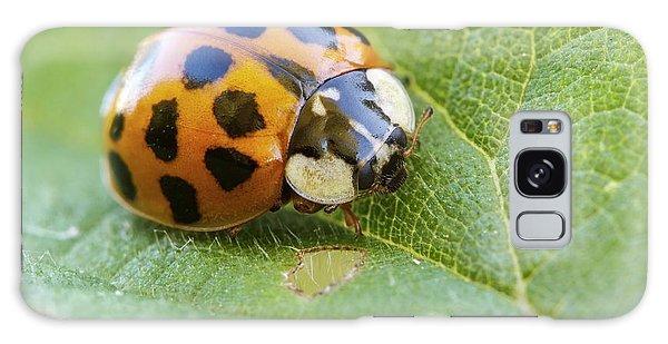 Harlequin Ladybird Galaxy Case
