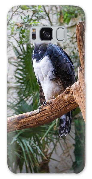 Harpy Eagle Galaxy Case