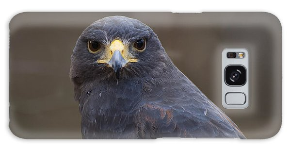 Featured Images Galaxy Case - Harris Hawk by Chris Flees