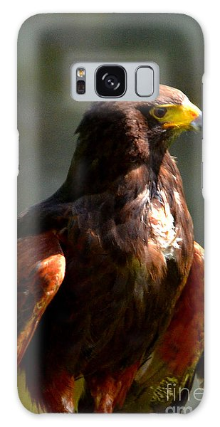 Harris Hawk In Thought Galaxy Case