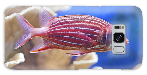 Hawaiian Squirrelfish Galaxy Case