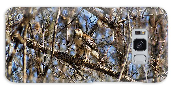 Hawk In A Tree Galaxy Case