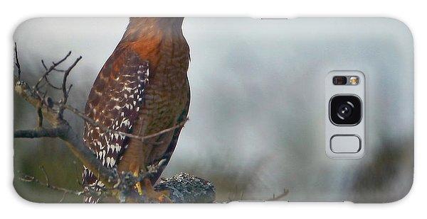 Hawk In The Mist Galaxy Case