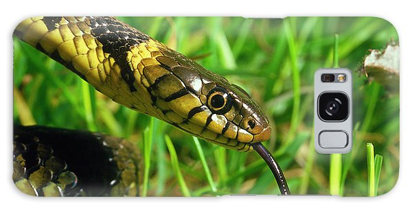 Grass Snake Galaxy Case - Head Of Common Grass Snake by Dr Jeremy Burgess/science Photo Library