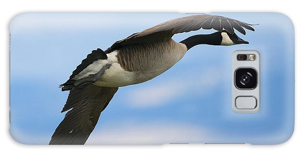 Canada Goose Galaxy Case - Heading North by Mike Dawson