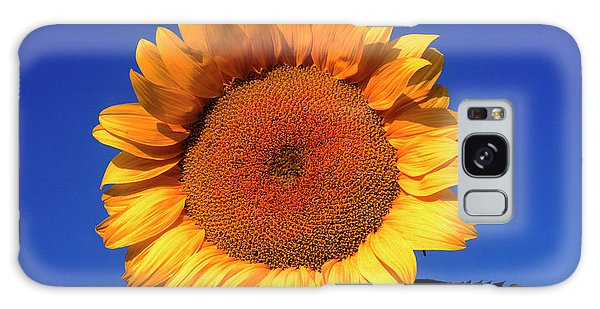 Helianthus Annuus Galaxy Case - Helianthus Annuus. by David Henderson/science Photo Library