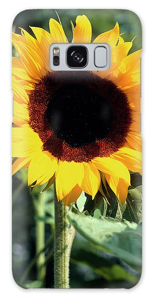 Helianthus Annuus Galaxy Case - Helianthus Annuus Full Sun. by The Picture Store/science Photo Library