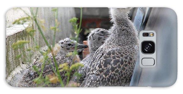 Herring Gull Chicks Galaxy Case