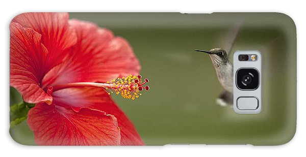 Hibiscus Hummingbird Galaxy Case by John Crothers