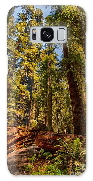 Hikers Paradise - California Redwoods I Galaxy Case