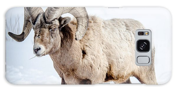 Big Horns On This Big Horn Sheep Galaxy Case