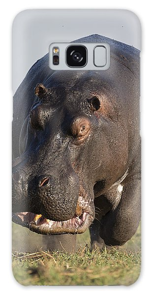 Galaxy Case featuring the photograph Hippopotamus Bull Charging Botswana by Vincent Grafhorst