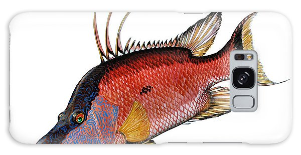 Hogfish On White Galaxy Case