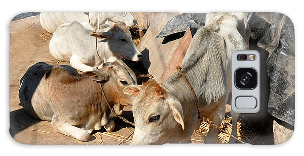 Holy Cows Odisha India Galaxy Case