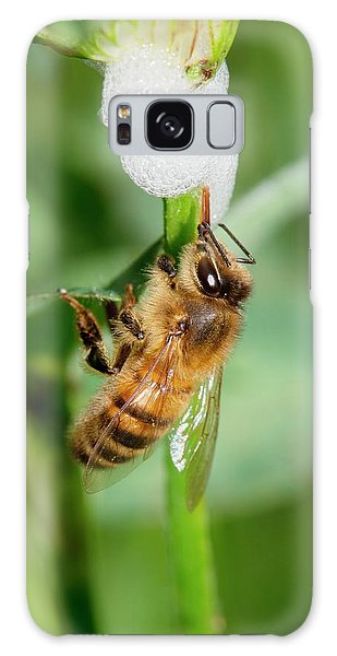 Cuckoo Galaxy Case - Honey Bee Drinking From Cuckoo-spit by Dr. John Brackenbury