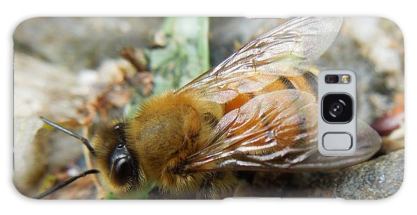 Honey Bee Galaxy Case by Pete Trenholm