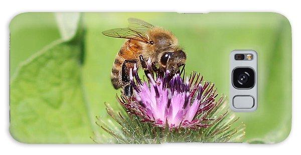 Honeybee On Burdock Galaxy Case by Lucinda VanVleck