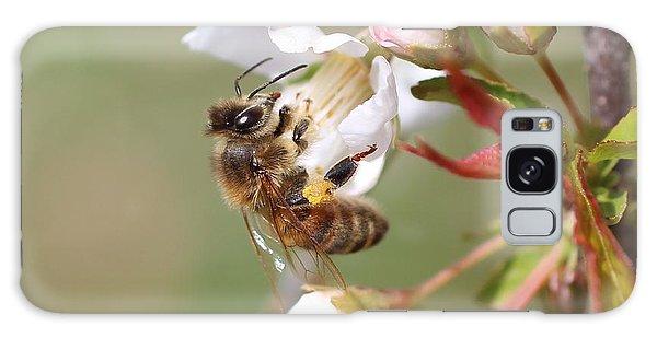 Honeybee On Cherry Blossom Galaxy Case