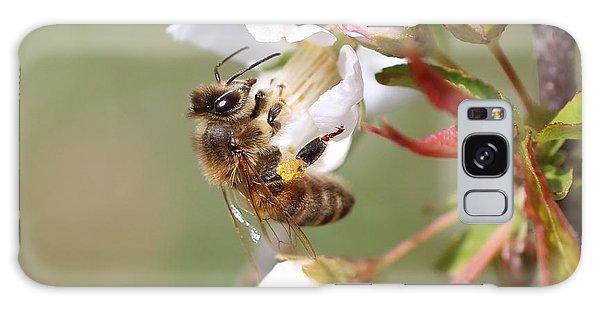Honeybee On Cherry Blossom Galaxy Case by Lucinda VanVleck