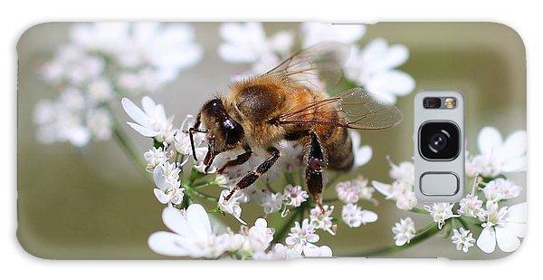 Honeybee On Cilantro Galaxy Case
