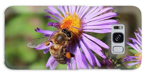 Honeybee On Purple Wild Aster Galaxy Case by Lucinda VanVleck