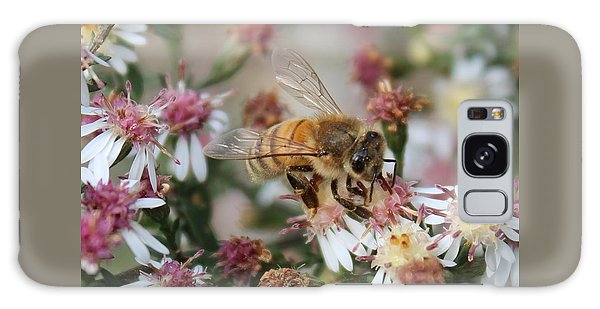 Honeybee Sipping Nectar On Wild Aster Galaxy Case by Lucinda VanVleck