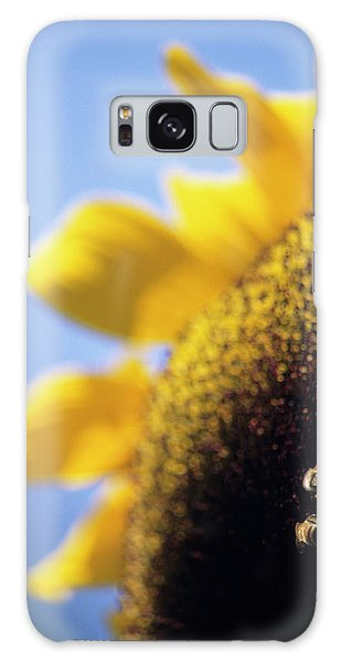 Helianthus Annuus Galaxy Case - Honeybees Pollinating A Sunflower by David Nunuk/science Photo Library